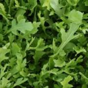 Serrated-Salad-Rocket